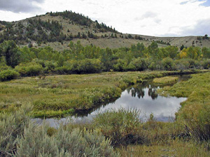 Grasshopper Creek near Bannack, MT