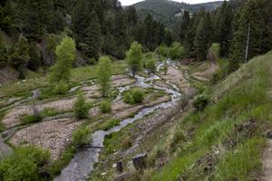 Alder Creek in summer